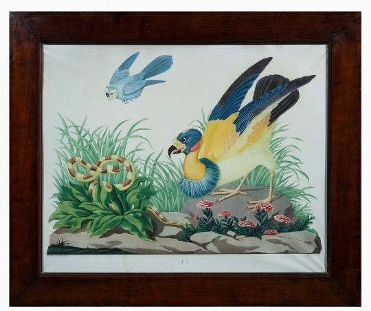 Raineri-avvoltoio-Giglio