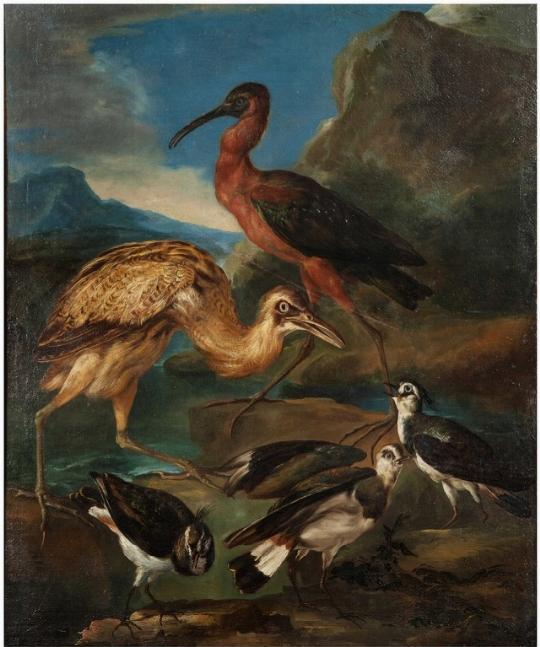Uccelli acquatici, Crivellone