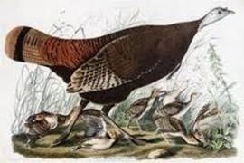 Audubon John James - PITTORI e SCULTORI